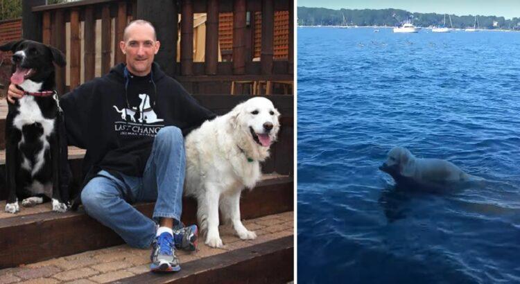 Vaikščiodamas pajūriu vyras nustebo, kai juo šuo staiga šoko į vandenį ir pradėjo link kažko plaukti. Pamatęs, ką gelbėja šuo, šeimininkas pradėjo filmuoti